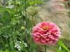 W jaki sposób zaprojektować ogród, aby był funkcjonalny i atrakcyjny?