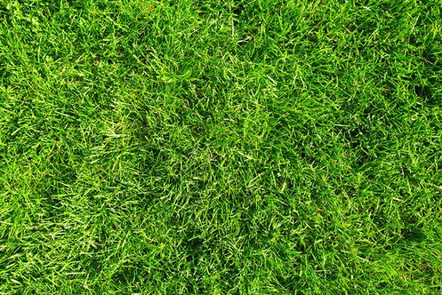 Jakie wybrać nasiona do trawnika?
