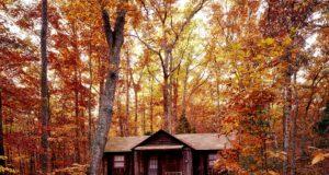 budowanie domu z drewna