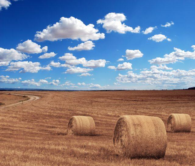 Sprzedaż działki rolnej